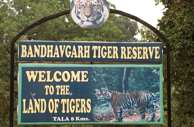 Bandhavgarh National Park MP