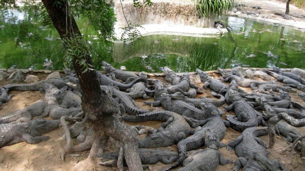Madras Crocodile Bank Trust Chennai